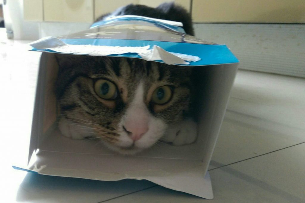 But I really like boxes. The smaller the better!